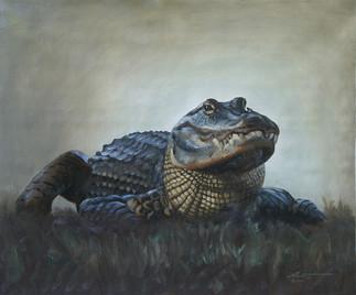 A-85-alligator.jpg