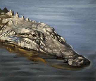 A-79-alligator.jpg