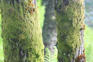 Moss-1.jpg