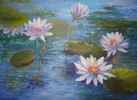 Waterlilies (K56)