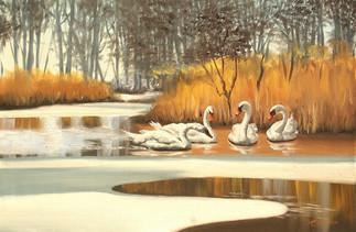 S-95-swans.jpg