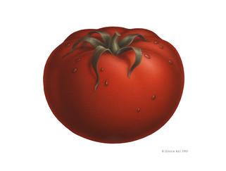 fruit-tomato.jpg