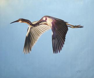 H-70-tc Heron.jpg