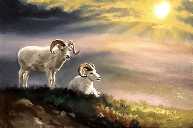 S-107-Dall Sheep.jpg