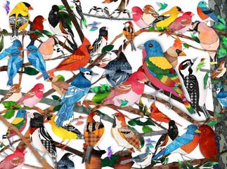 Bird Medley - no background