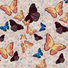 Butterflies, Yellow, Brown and B