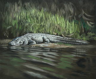 A-71-alligator.jpg