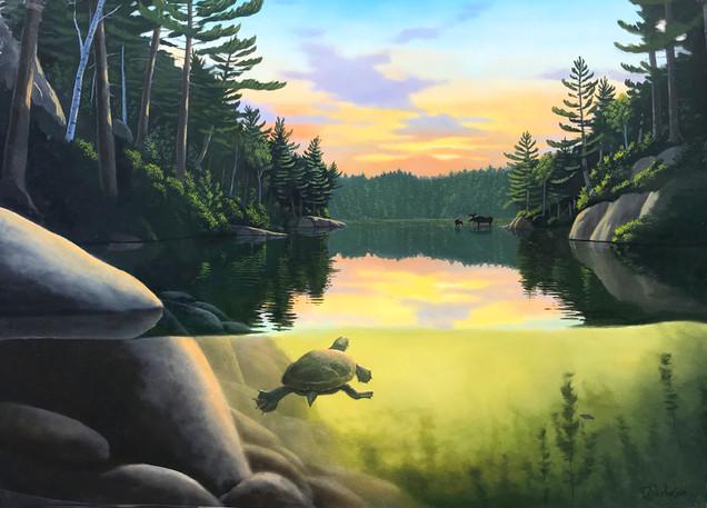 Muskoka Moose - Marine and Wildlife