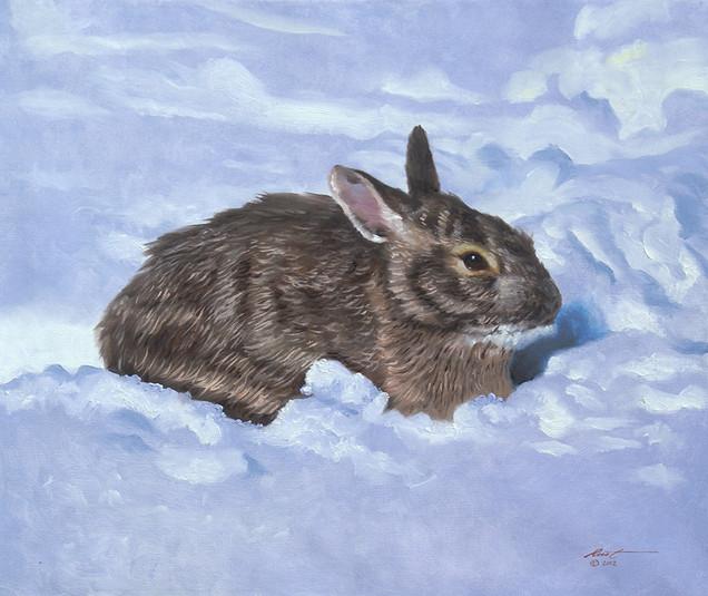 R-31-rabbit.jpg