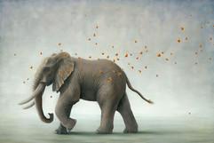 Elephant (Other Animals - Elephant)