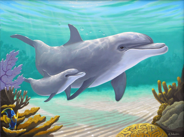 Dolphins and Coral