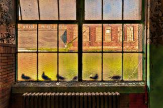 The Birds of Scranton_ - Scranton Lace C