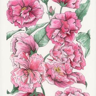 wild roses.jpg