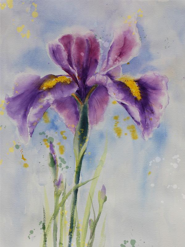 Purple Iris
