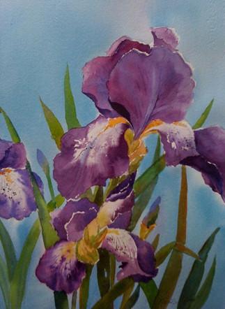 Pretty Purple Iris