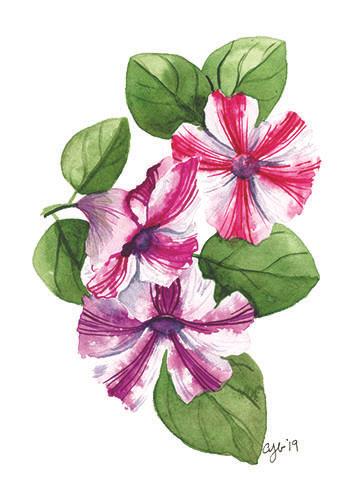 spring petunias.jpg