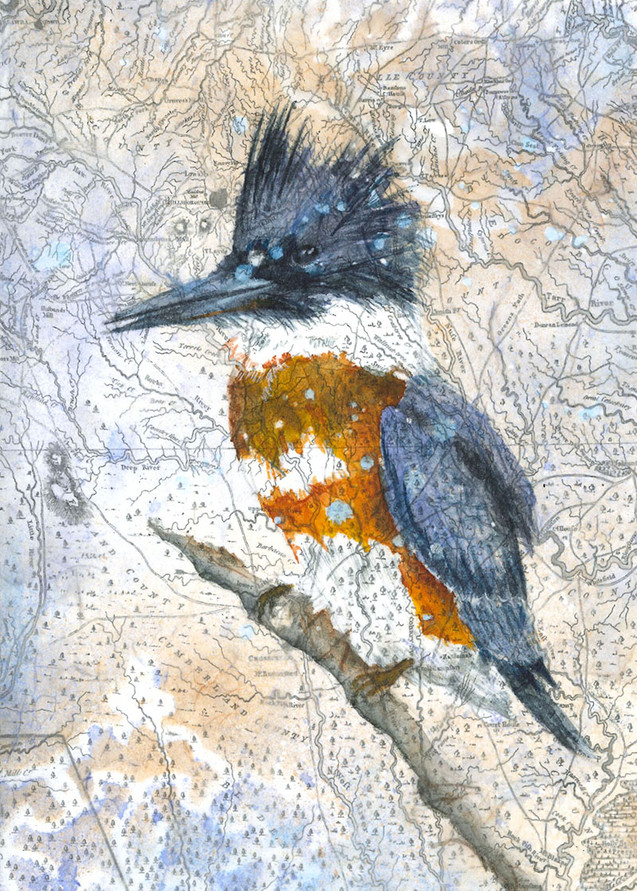 Kingfisher from birds of the Haw.jpg