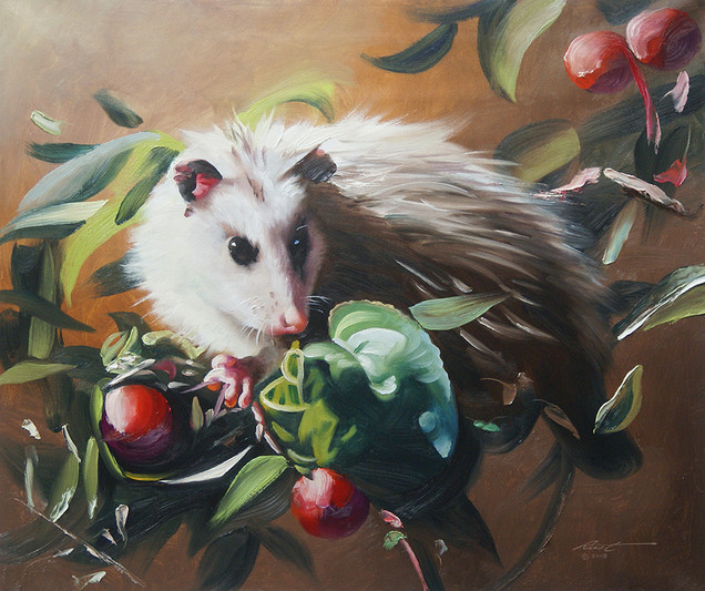 O-66-opossum.jpg