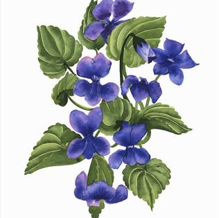 Violets-.jpg