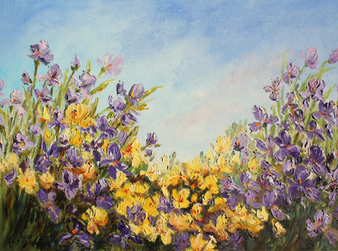 Field of Yellow and Purple Flowers (K102