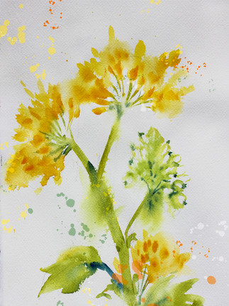 Yellow Watercolor Flowers