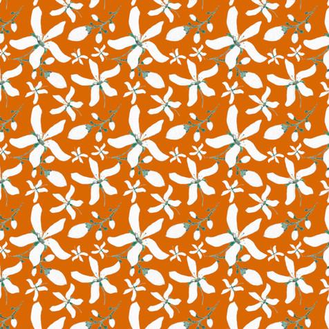 Orange-1e-orange.jpg