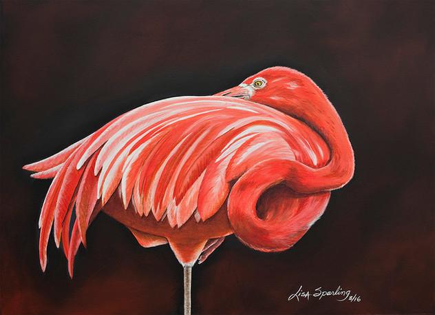 Outstanding - Flamingo