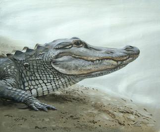 A-70-alligator.jpg