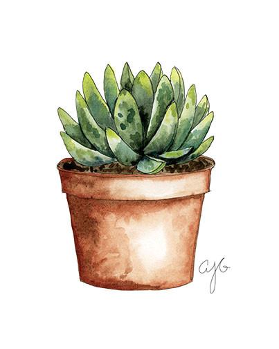 terracotta pot succulent.jpg