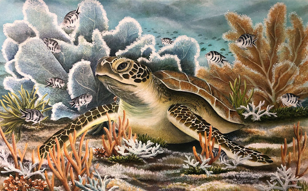Fanfare - Turtle