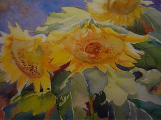 Sunflowers (K101)