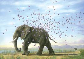 Metamorphasis (Other Animals - Elephant)