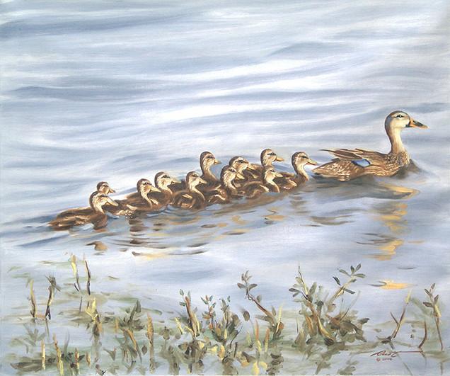D-92-Mallard Ducks.jpg