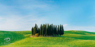 Temenos Grove Tuscany Italy.jpg