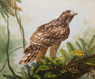 H-49-rs Hawk.jpg
