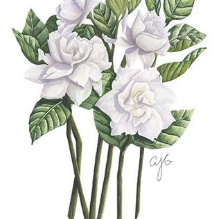 janes gardenias.jpg