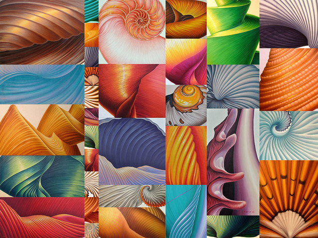 Collage of Seashells
