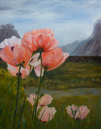 Poppies at Stalheim