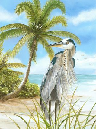 Heron - Blue Heron on Beach