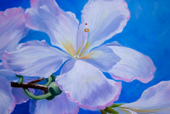 Cherry Blossom-2.jpg