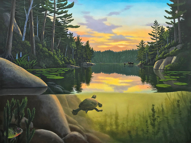 Muskoka Moose - Wildlife