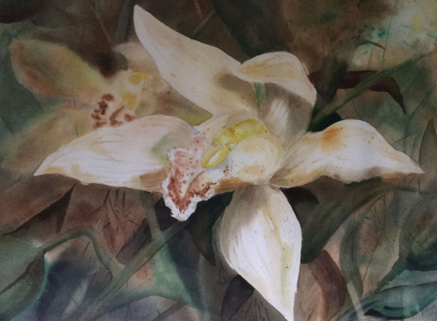White Orchids (K52)