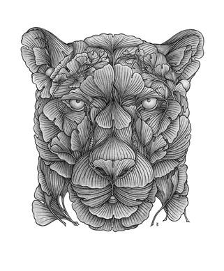 Panther-Web.jpg