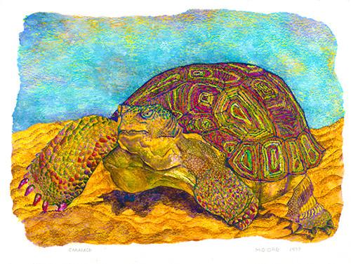 Carapace (Reptile Series - Turtle)