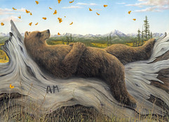 AM (Bear Collection)