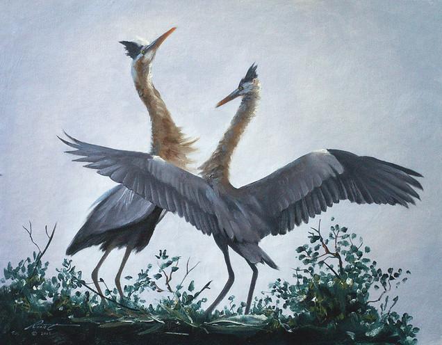 H-46-juvenile Herons.jpg