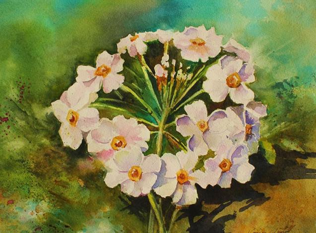 Small White Flowers (K73)