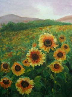 Field of Sunflowers (K64)