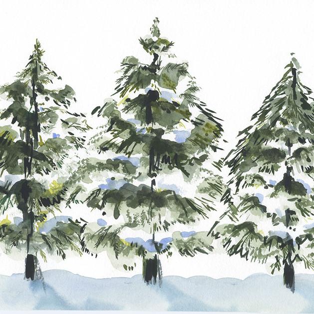 HR 3 christmas trees.jpg