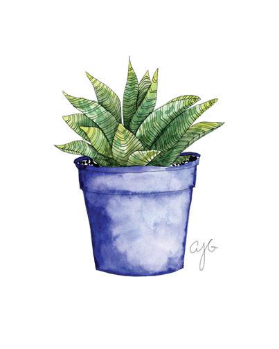 blue pot succulent.jpg